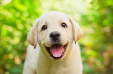 Dogs snub people who are mean to their owners