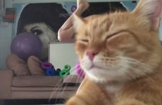 This rude cat ruined its owner's yoga video, and now it's become a meme