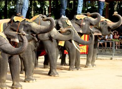 An elephant show in Thailand.