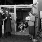 Heating lamps for the chickens, 28 February 1956<span class=