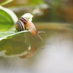 Jackie Tighe got up close to this snail at Ballycanew.