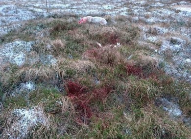 Blood on the grass.