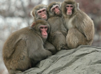 File photo: Snow monkeys