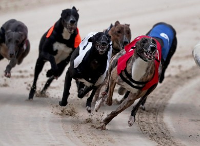 The IGB has vowed to continue racing at Shelbourne Park.