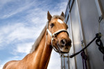 Man injured loading horse onto lorry for trainer Margaret Mullins awarded �92,000