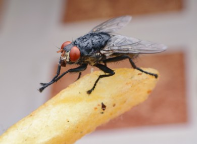 Residents at Irishtown, Sandymount and Ringsend have been 'plagued' by bluebottle flies for days.