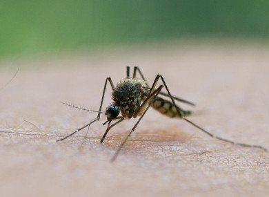 Italy was declared malaria-free in 1962