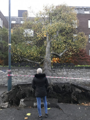 As tree after falling down on a apartment block on Cylde Road, Ballsbridge.
