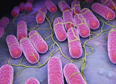 The bacteria is resistant to antibiotics