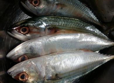 File photo of mackerel