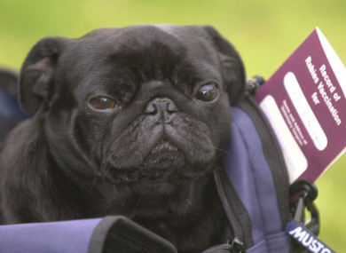 Frodo Baggins was the first animal to arrive in Britain under the pet passport scheme in 2000.