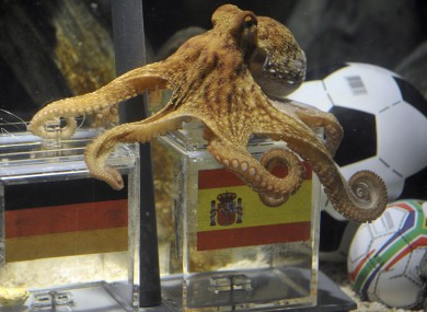 'Psychic' Paul the Octopus rose to fame after predicting eight World Cup results correctly - with less than a 0.4% chance of doing so by fluke.