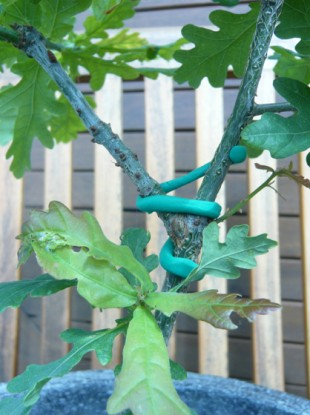One Sugru user used the multipurpose goo to keep oak branches together.
