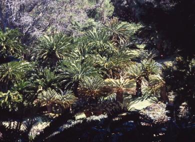 Capetown, South Africa. Kirstenbosch National Botanic Gardens.