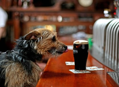 Even the dog on the street knows an Irish pint is the best