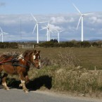 Billy Collins from Wexford town rides his sulky past a field of wind turbines in Kilmore, Co Wexford last year.