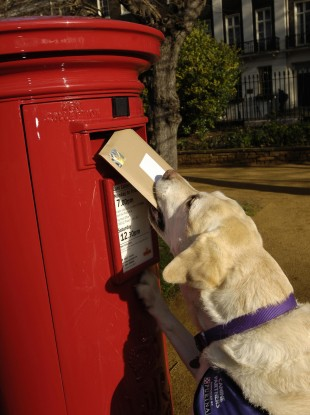 And before anyone leaves a comment, yes, this is a British post box. But the dog was too cute not to use it...