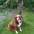 A collie aged about 18 months, Raindrop was found wandering around Ballinahinch Castle Hotel, and is described as a gentle dog who needs walks but is not hugely energetic. (Image: Madra.ie)