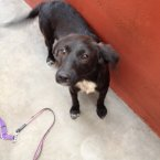 A six-month Collie/Lab cross who enjoys fun and games. (Image: Madra.ie)