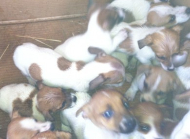 Some of the puppies
