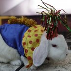 A rabbit dresses up as a clown, obviously in order to cheer himself up because he knows winter is here. (AP Photo/Lynne Sladky)