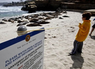 FILE - In this May 29, 2011, photo visitors watch harbor seals lay on the sand along La Jolla beach known as Children's Pool in San Diego.