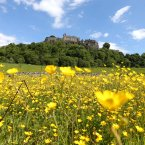 Buttercups in the fields surrounding Stirling Castle during a spell of clement weather.