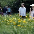 Visitors to the High Line walk past the greenery in New York. A heat advisory is in effect for the New York metropolitan area until Sunday evening. (AP Photo/Mary Altaffer)