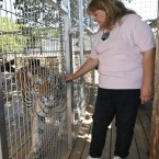 Carr pets Brutus the tiger through the wire of his cage, near the new home she has found for herself and Irwin.<span class=