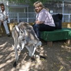 Christie Carr watches as Irwin the kangaroo hops around an enclosure.<span class=