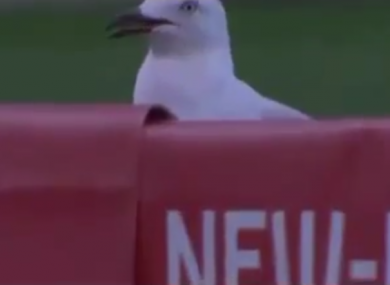 The lucky seagull.