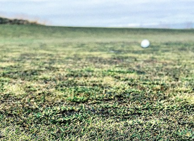 Poulter's pic shows just how bad the greens were.