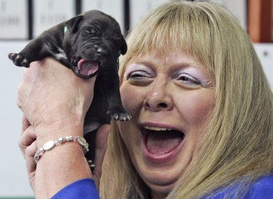Bernann McKinney from the US holds one of five pitbulls cloned from her deceased pet 'Booger'. (File 2008)