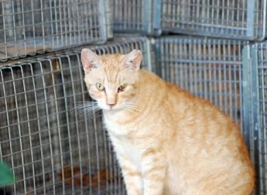 A cat sits at a feral cat colony near Honolulu.