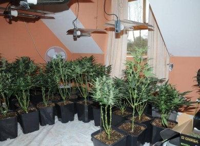 Images of the grow house in Carlow