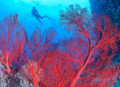 Great Barrier Reef Corals Experiencing Catastrophic Die Off