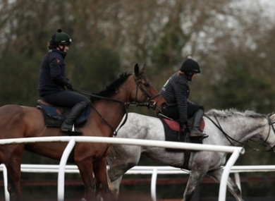 Race horses from a yard in Worcestershire.