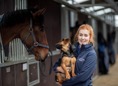 Leanne Holton with Logan the dog and one of Gordon Elliot's new unnamed horses this week.