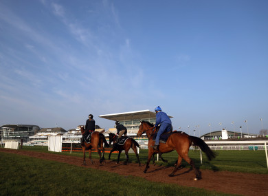 Horses on the gallops at Aintree Racecourse today.