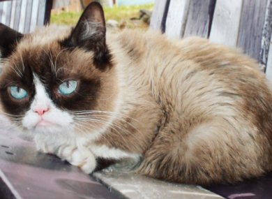 Then named Tardar Sauce, Grumpy Cat burst to fame in 2012.
