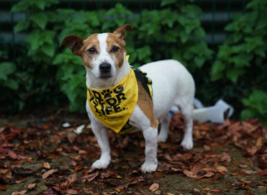 Pudsey, a dog abandoned outside the Dogs Trust this year