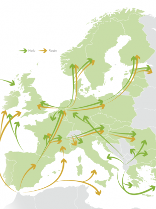 Where cannabis originates and travels to in Europe.