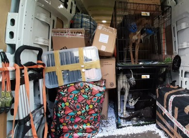 The back of the van transporting the greyhounds.