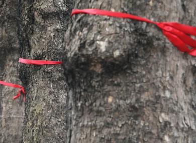 Trees with red ribbons around them on Baggot Street last year.