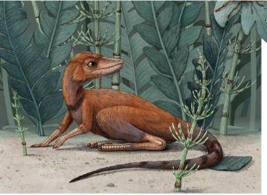 An illustration of Kongonaphon kely.