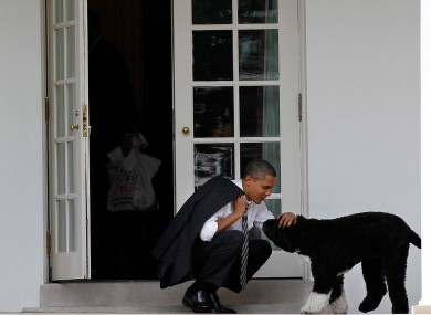 Barack Obama with Bo at the White House in 2012.