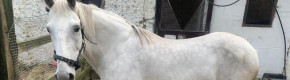 Horse charity raises concerns as it records its first case of suspected bestiality in ten years