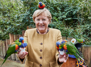 Angela Merkel on the campaign trail this week.